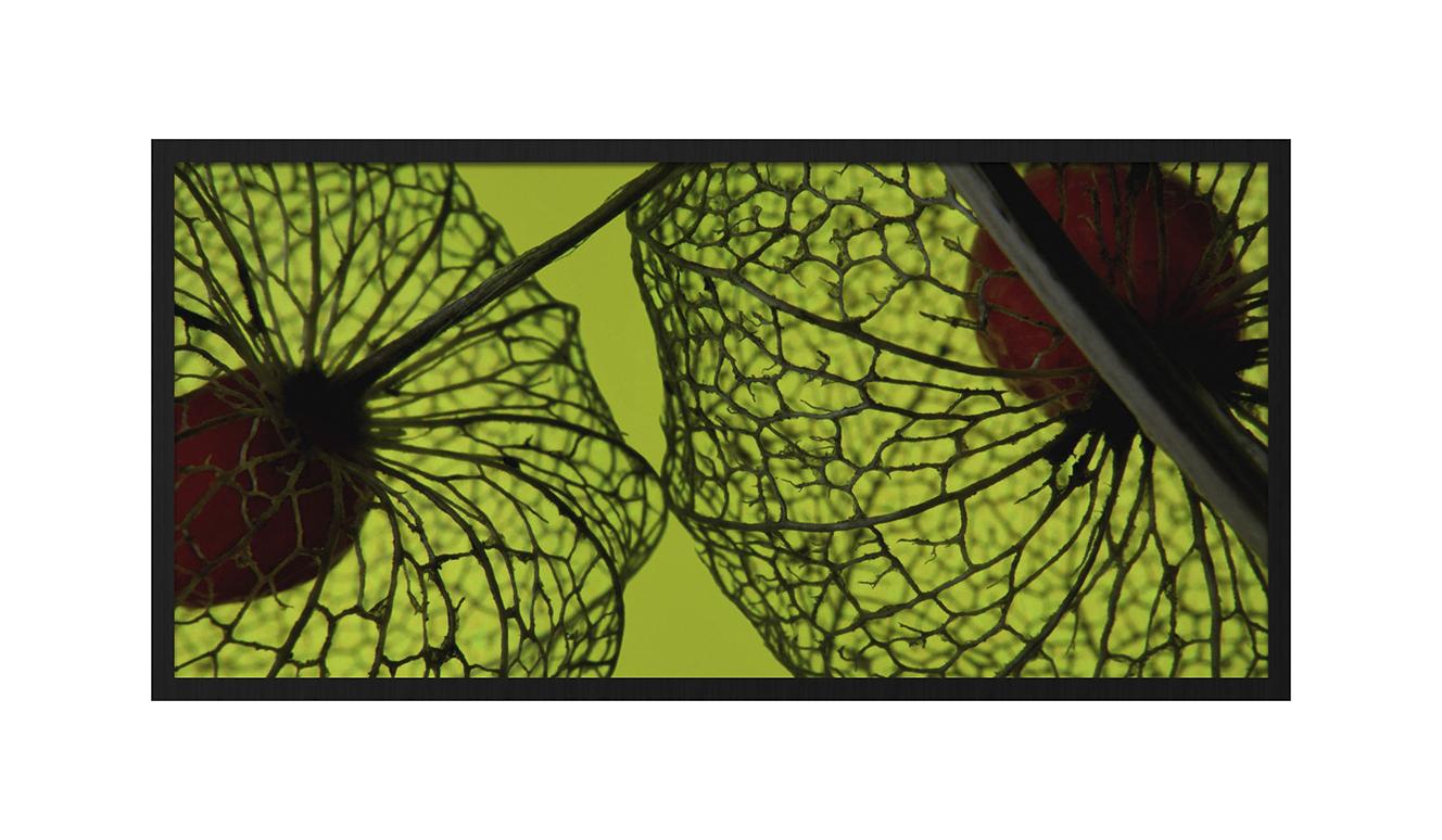 Botanical stories 008 98x48