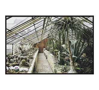 Botanical stories 013 148x98